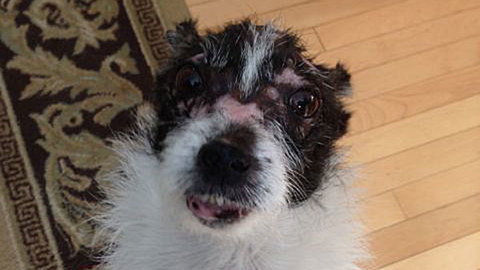 Local rescue dog, Faith, to compete in The World's Ugliest Dog Contest