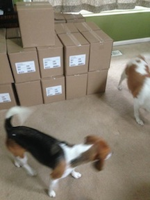 "Beagle inspectors checking out boxes of ""Faith, the Ugly Dog"""